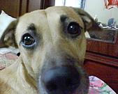 黃色小狗:DSC00013.JPG