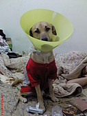 黃色小狗:DSC00183.JPG