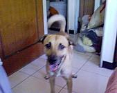 黃色小狗:DSC00030.JPG