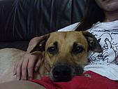 黃色小狗:DSC00186.JPG