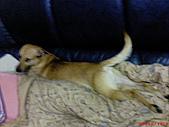 黃色小狗:DSC00202.JPG