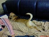 黃色小狗:DSC00203.JPG