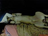黃色小狗:DSC00204.JPG