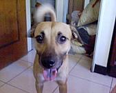 黃色小狗:DSC00031.JPG