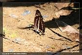 內溝溪生態:IMG_8103.jpg