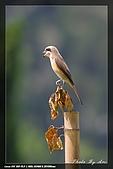 中正賞鳥:IMG_8807.jpg