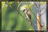 中正賞鳥:IMG_8815.jpg
