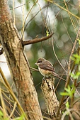 大安森林公園賞鳥:IMG_2921