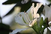 960303植物園隨拍:IMG_2075
