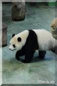 木柵動物園一遊:IMG_2594.JPG
