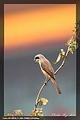 中正賞鳥:IMG_8828.jpg