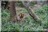 木柵動物園一遊:IMG_2603.JPG