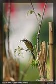 中正賞鳥:IMG_8833.jpg