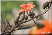 三重 - 栗尾椋鳥:IMG_1000.JPG