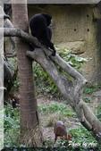 木柵動物園一遊:IMG_2605.JPG