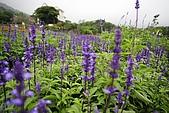 發現花園、台北奧萬大外960415:IMG_3395