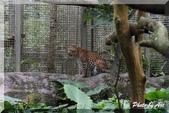 木柵動物園一遊:IMG_2615.JPG