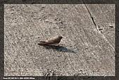 鹿角溪賞鳥:IMG_5464.jpg