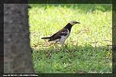 中正賞鳥:IMG_8865.jpg