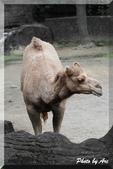 木柵動物園一遊:IMG_2642.JPG