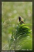 鹿角溪賞鳥:IMG_5492.jpg