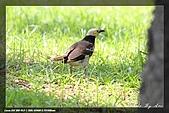 中正賞鳥:IMG_8866.jpg