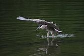 大安森林公園賞鳥:IMG_2951