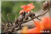 三重 - 栗尾椋鳥:IMG_0981.JPG