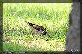 中正賞鳥:IMG_8867.jpg