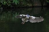 大安森林公園賞鳥:IMG_2954