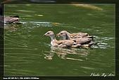 中正賞鳥:IMG_8871.jpg