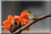 三重 - 栗尾椋鳥:IMG_0968.JPG