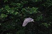 大安森林公園賞鳥:IMG_2970