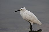 大安森林公園賞鳥:IMG_2978