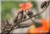 三重 - 栗尾椋鳥:IMG_1012.JPG