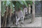 木柵動物園一遊:IMG_2638.JPG