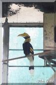 木柵動物園一遊:IMG_2622.JPG
