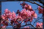 植物園大安打鳥:IMG_7676.jpg