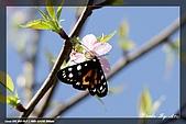 福山、台北植物園賞鳥行980224:IMG_1424.jpg