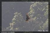 福山、台北植物園賞鳥行980224:IMG_1434.jpg
