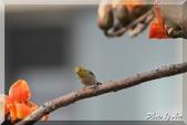 三重 - 栗尾椋鳥:IMG_0975.JPG