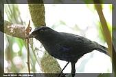 福山、台北植物園賞鳥行980224:IMG_1445.jpg