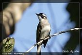 植物園大安打鳥:IMG_7680.jpg