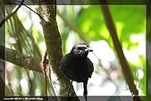 福山、台北植物園賞鳥行980224:IMG_1462.jpg