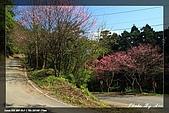 福山、台北植物園賞鳥行980224:IMG_1489.jpg