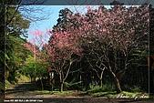 福山、台北植物園賞鳥行980224:IMG_1493.jpg