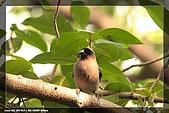 福山、台北植物園賞鳥行980224:IMG_1517.jpg
