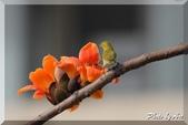 三重 - 栗尾椋鳥:IMG_0966.JPG