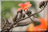 三重 - 栗尾椋鳥:IMG_1015.JPG