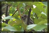 鴞與黑枕藍鶲:IMG_2410.jpg